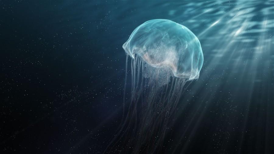 u00bb blog archive google jellyfish  u00bb digital quartz